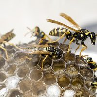 get rid of a wasp nest